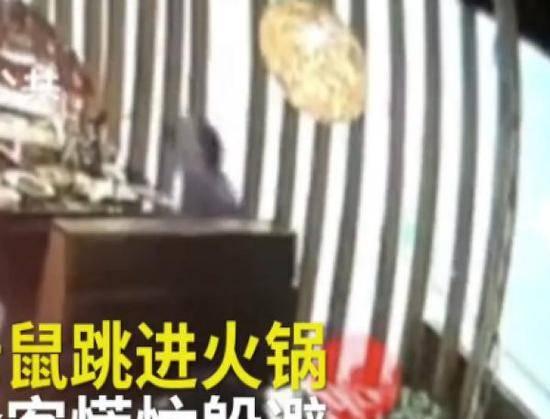 男子吃火锅突然跳进一只老鼠 店家还要求全额付款