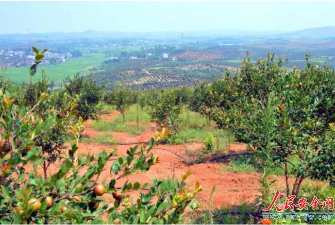 湖南常宁:延长油茶产业链 建设美丽乡村