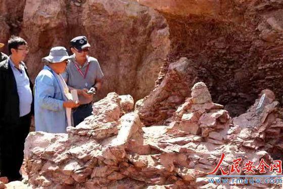 甘肃永靖县再次发现巨型恐龙骨骼化石