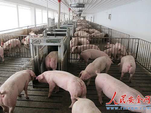 中央农村工作会议:要加快恢复生猪生产 落实扶持生猪生产政策