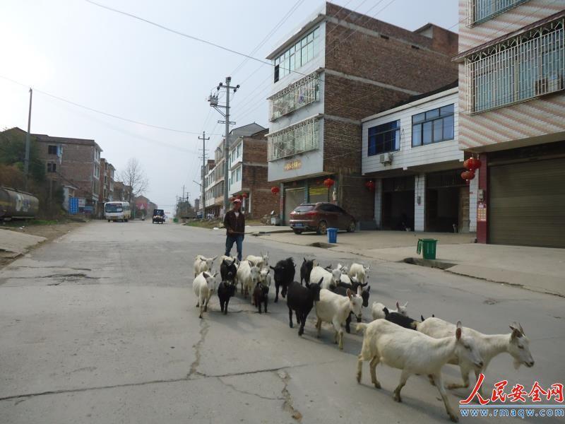 湖南:新邵陈家坊镇以山地优势引导贫困户养羊致富